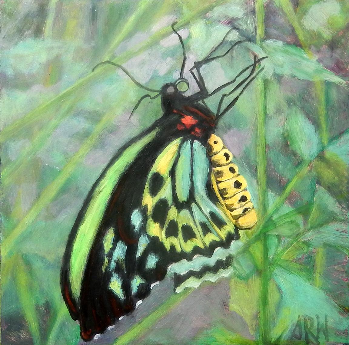 2020 Australian Butterfly 10x10 o/p